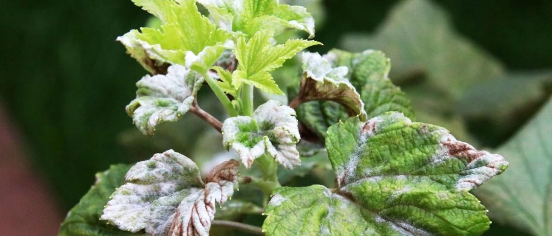 Schimmels en insecten op blad en in de bodem