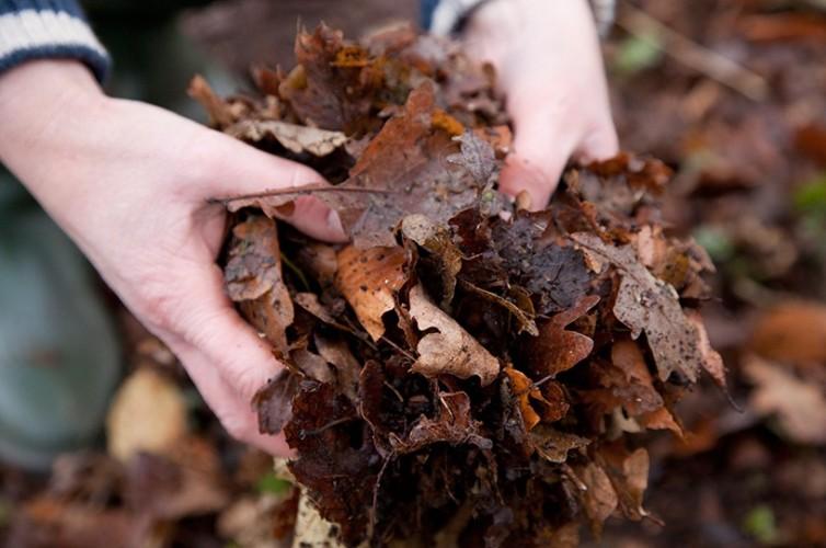 Bladeren in handen als mulchlaag