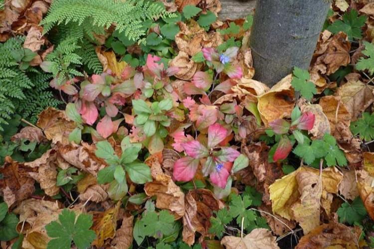 Mulchlaag van bladeren in border