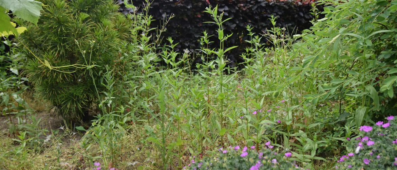 Onkruid verwijderen en voorkomen in je tuin
