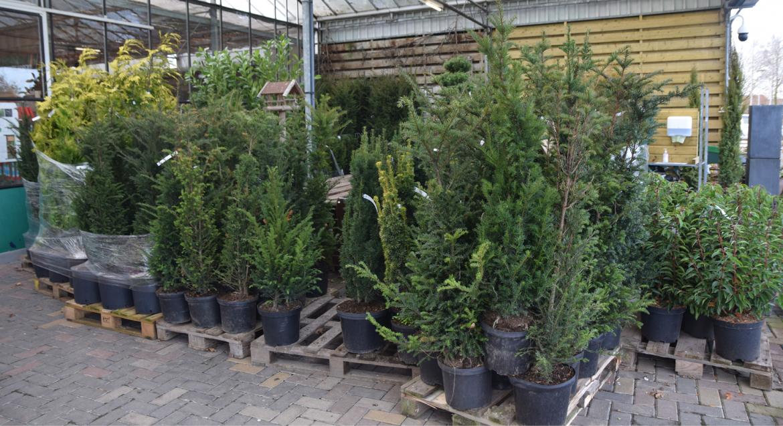 Bescherm je planten tegen late vorst onder een afdak