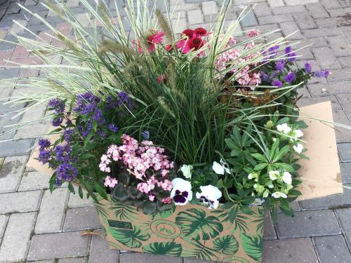 Plantenpakket cadeau geven - zelf samenstellen