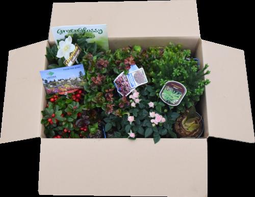 Planten als kerstpakket
