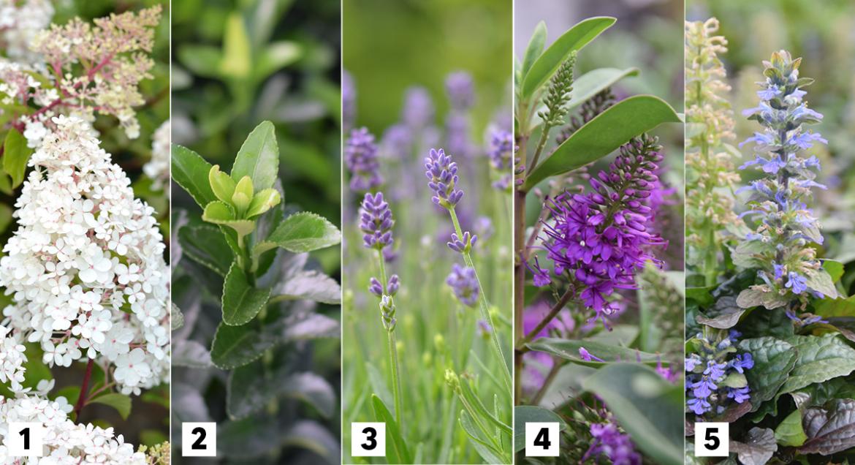 Top 5 vaste planten