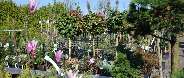 Leuke planten combinaties in het voorjaar