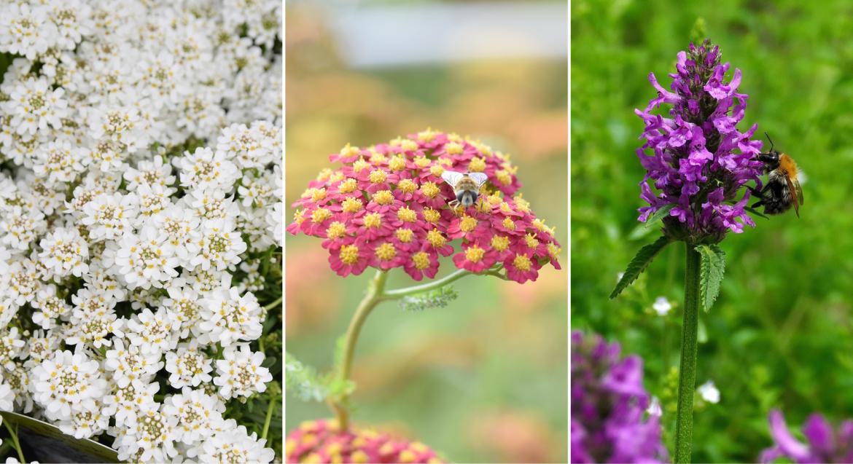 Vergeten bijenplanten