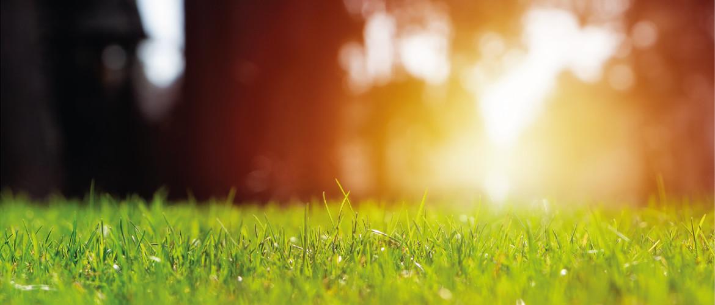 In 5 stappen een groen gazon in de herfst en winter