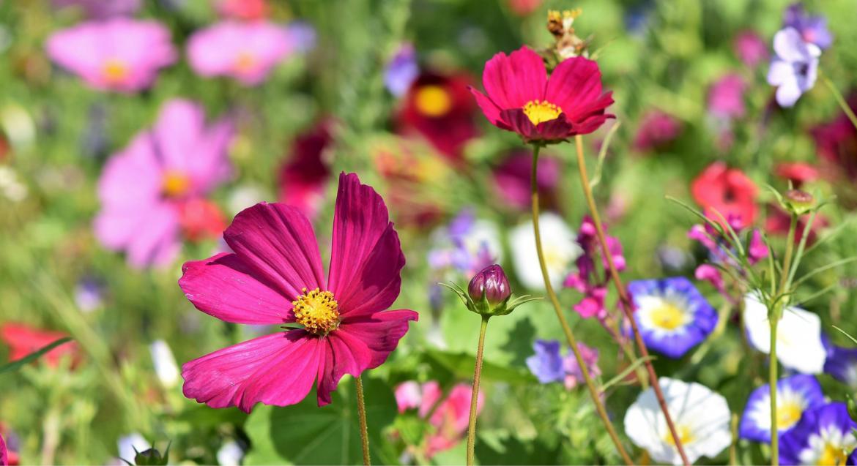 In het voorjaar vaste planten combineren
