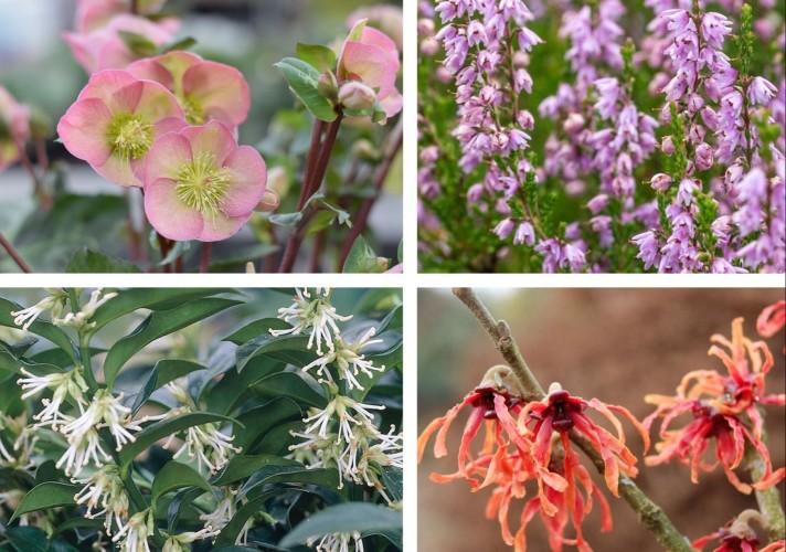 Winterbloeiende planten