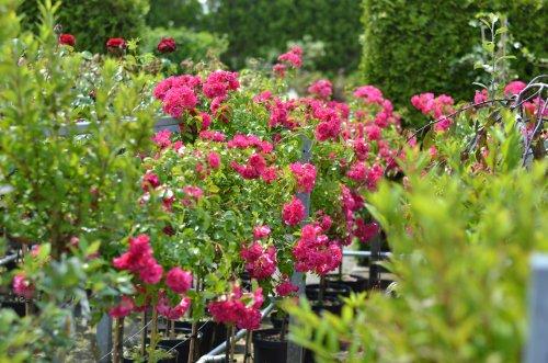 Planten kopen tuincentrum Wijchen