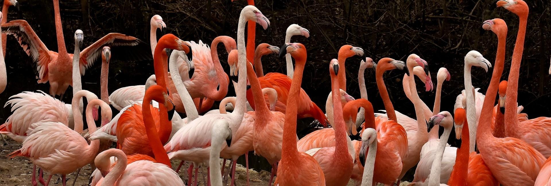 life-power-academy-flamingo