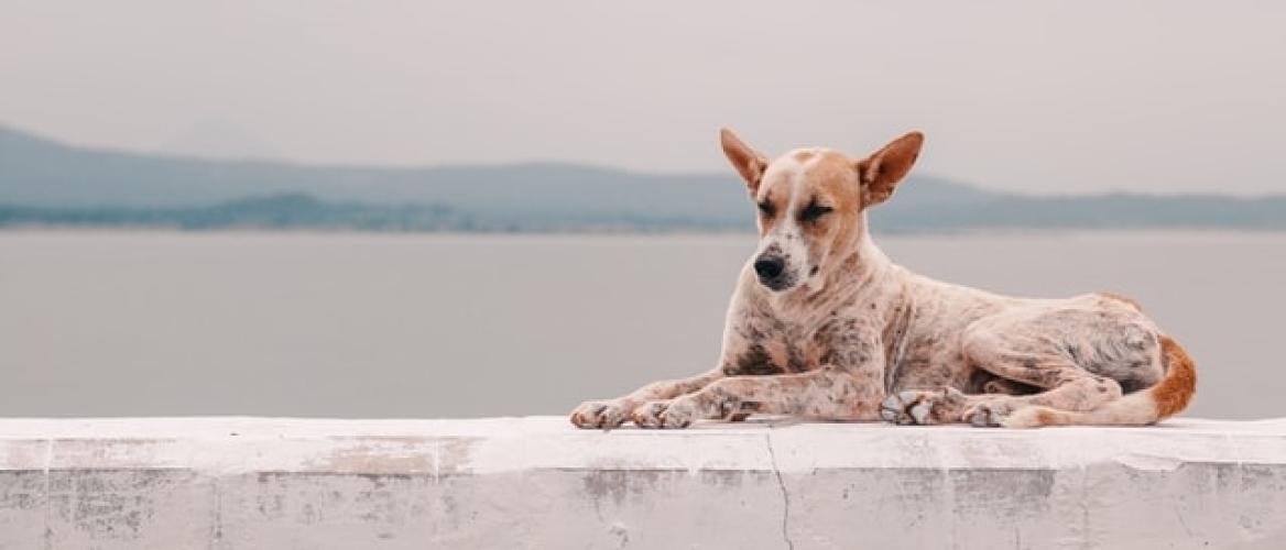 Artrose bij de hond Een pijnlijk geval