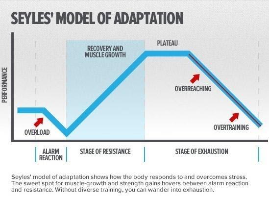 Seyles' model of adaptation