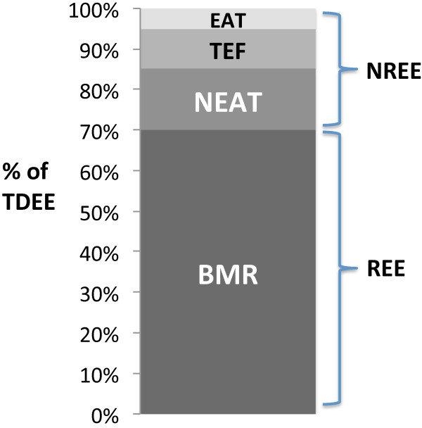 Componenten van de dagelijkse energiebehoefte
