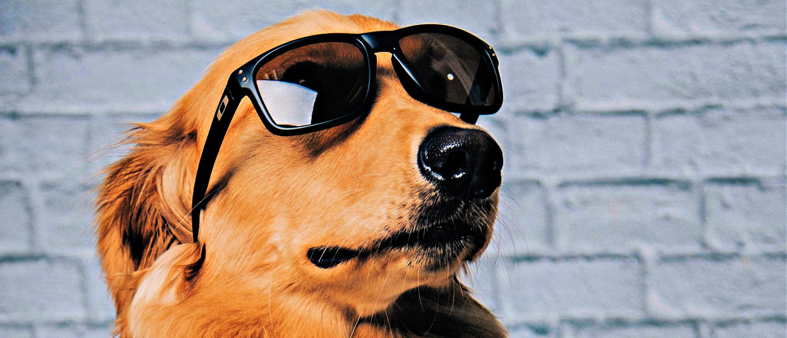 Ben jij ook zo'n trouwe hond?