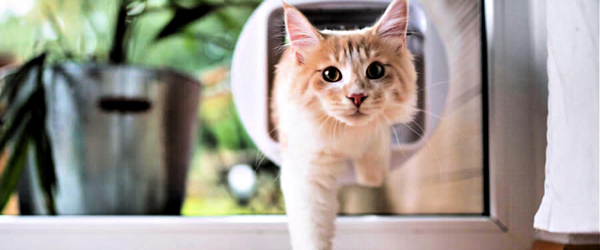 Kattenluik gluiperds