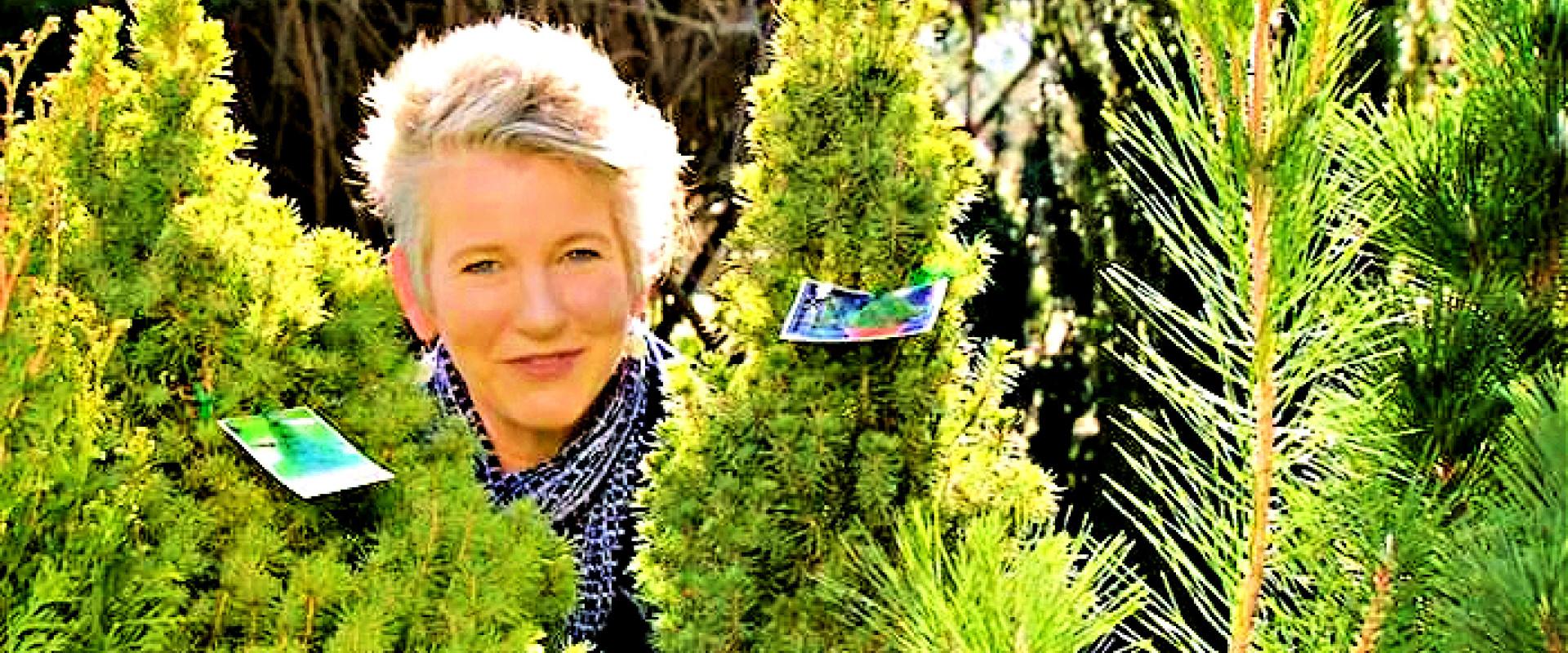 Hoe een loopbaan door de coniferen piept