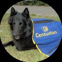 oudere hond behandeld met magneetveldtherapie