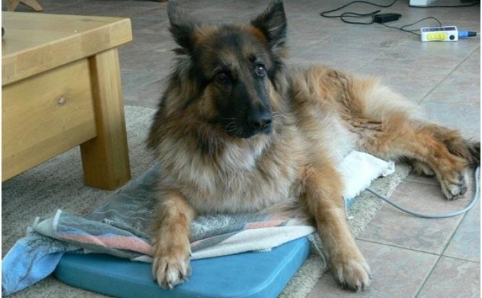 hond op magneetveld mat