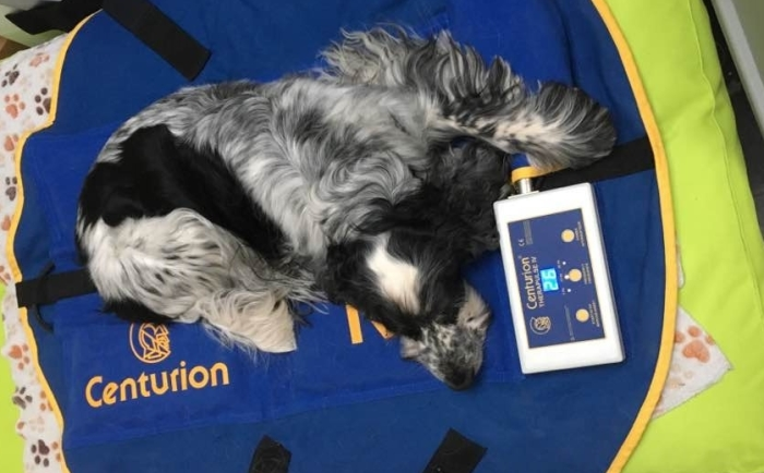hond-op-neckpiece pulserend magneetveldtherapie