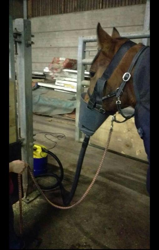 paard met astma aan transpirator