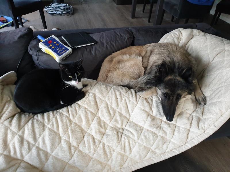 kat en hond zochten de magneetvelddeken zelf op