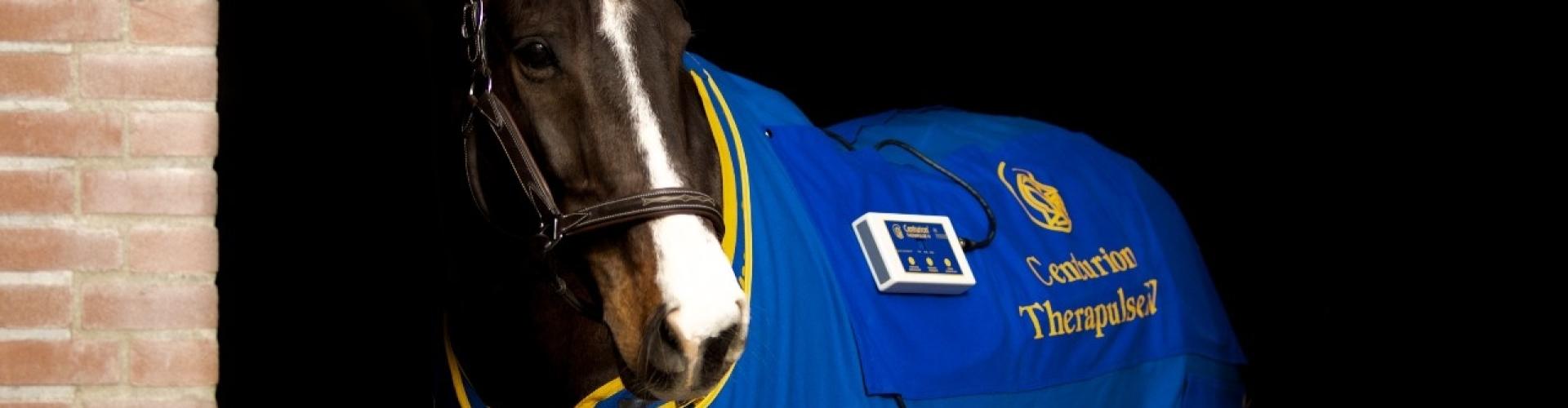 therapulse magneetvelddeken voor behandeling van paarden