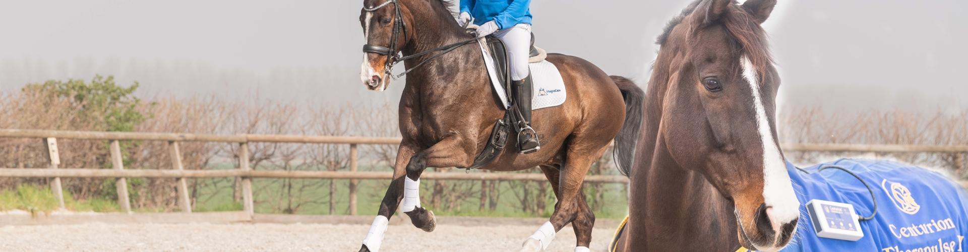 magneetveldtherapie-voor-het-sportpaard
