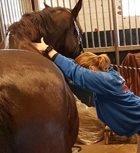 somone brus gebruikt magneetveldtherapie bij paardenspotmassage