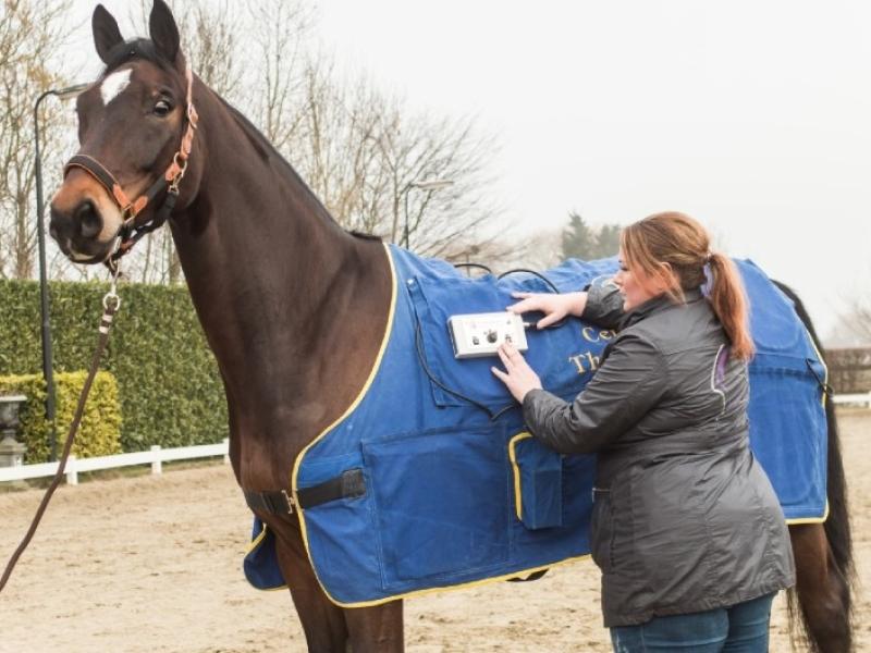 therapulse-in-de-paardensportmassage