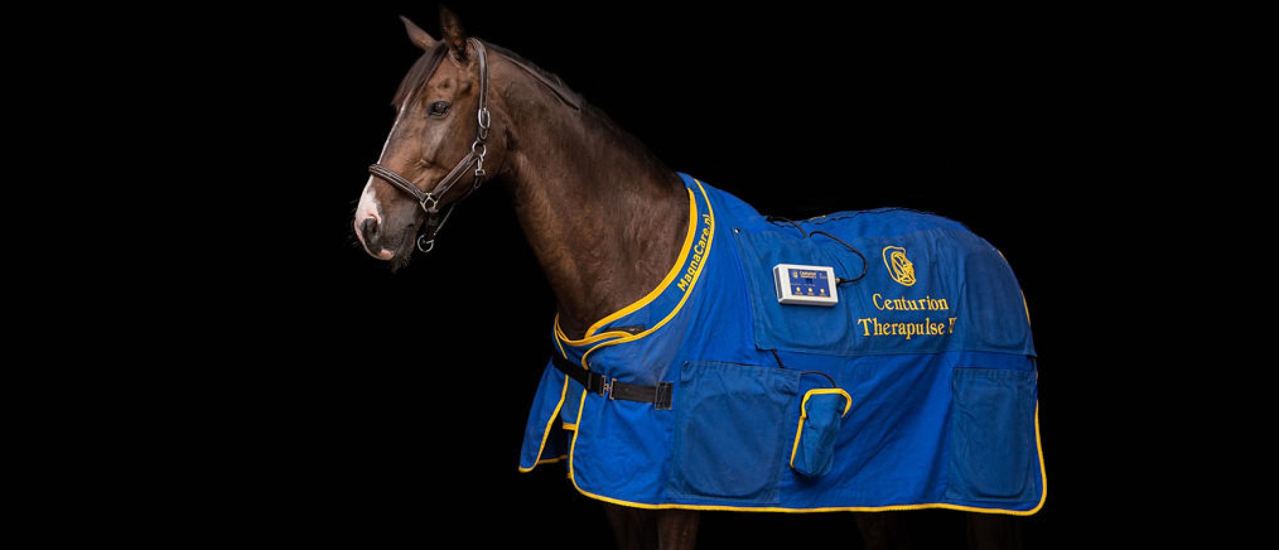 Pulserend magneetveld therapie, de dagelijkse wellness voor (sport)paarden