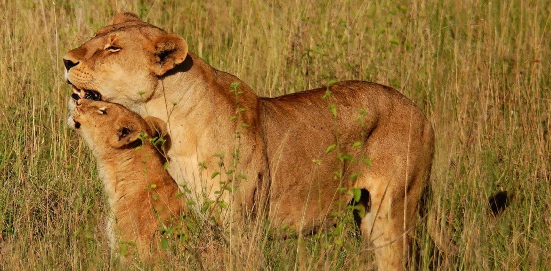 Africa Safari Holiday Tanzania