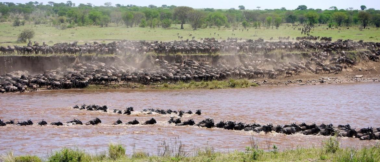 The Serengeti Migration in Tanzania