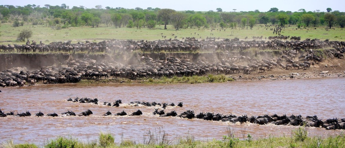 Migration in your Tour package Tanzania July and August