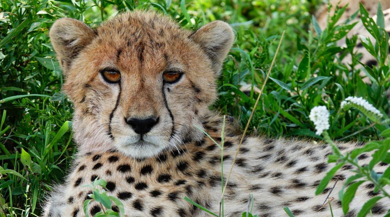 Northern circuit Tanzania safari