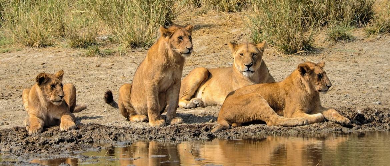 Northern Circuit vs Southern Circuit on a Tanzania Safari