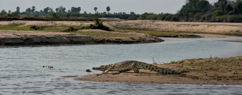 Nyere National Park Tanzania