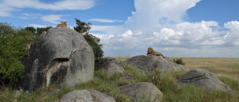 Serengeti Safari Tanzania | The Serengeti Calendar