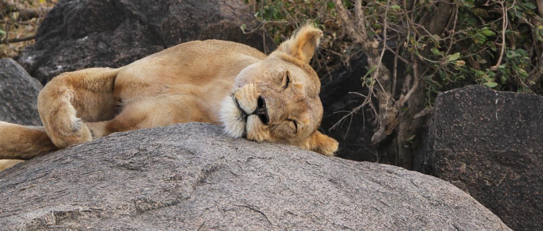 Tanzania Safari Experience Serengeti