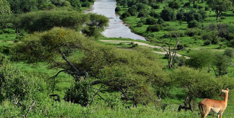 Safari in the rainy season of Tanzania
