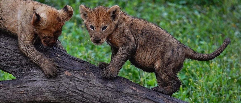 Tips to improve seeing wildlife on your safari