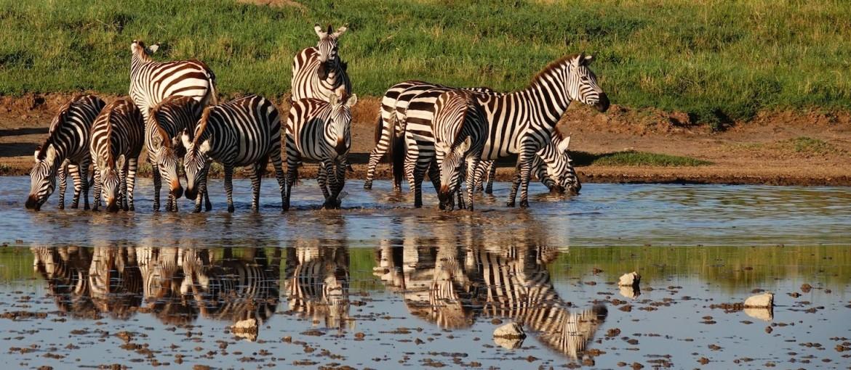 Tanzania Wildlife Safari Experience