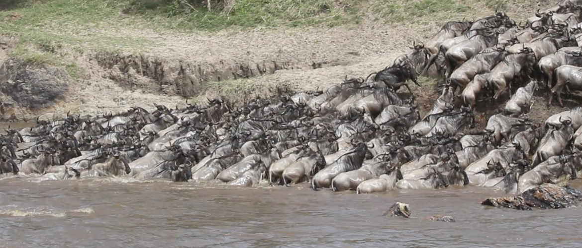Finding the best Tanzania safari tour package for July and August