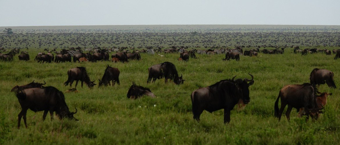 The best Tanzania safari tour package for January, February, March