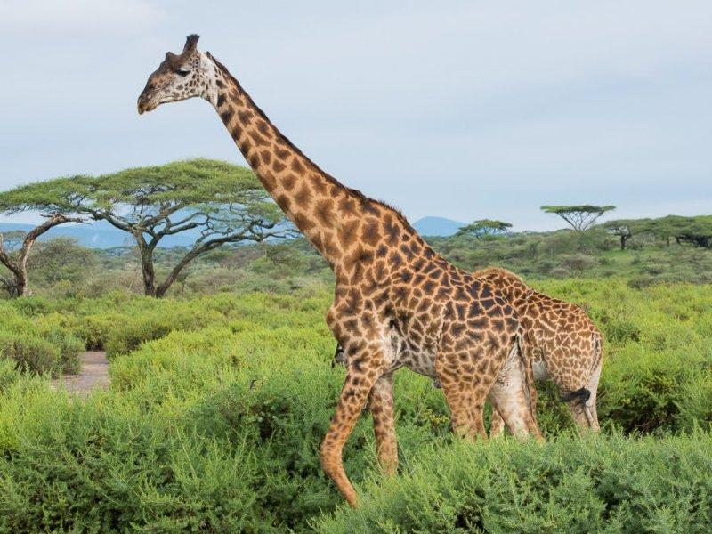 Tanzania Wildlife Safari