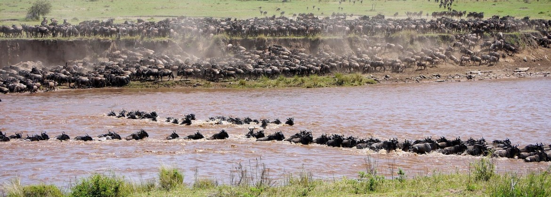 De grote migratie Serengeti Safari