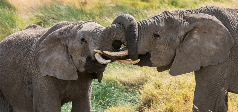 Bijzondere huwelijksreizen Safari in Tanzania