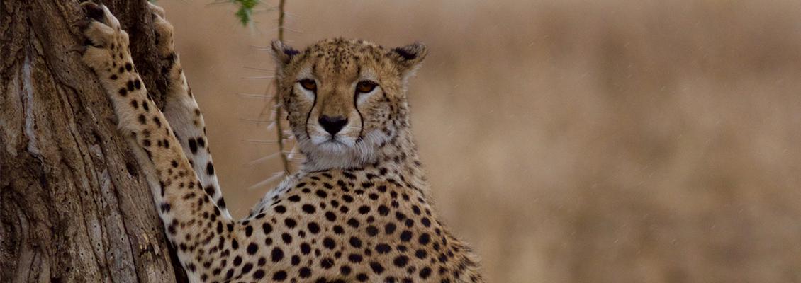 Safari vakantie Tanzania