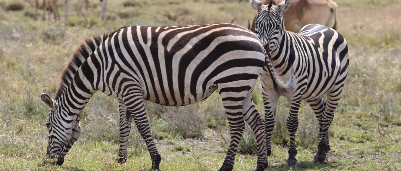 Wildlife Tanzania | Welke dieren zie je op safari in Tanzania?