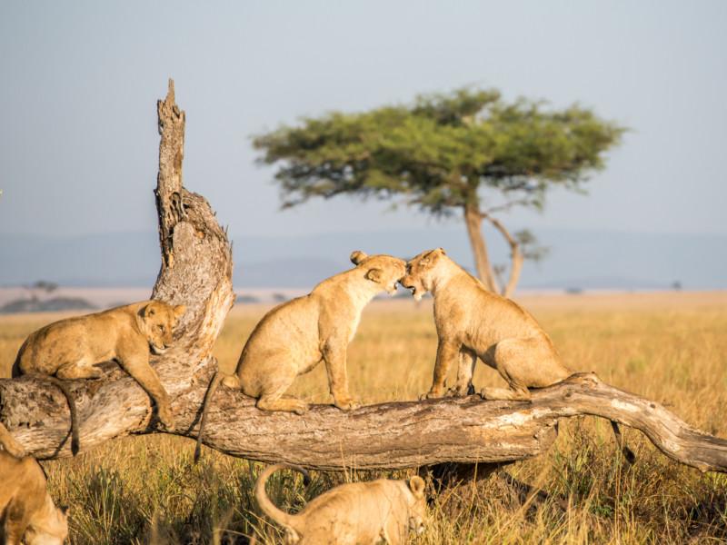 familiereis safari Tanzania rondreis